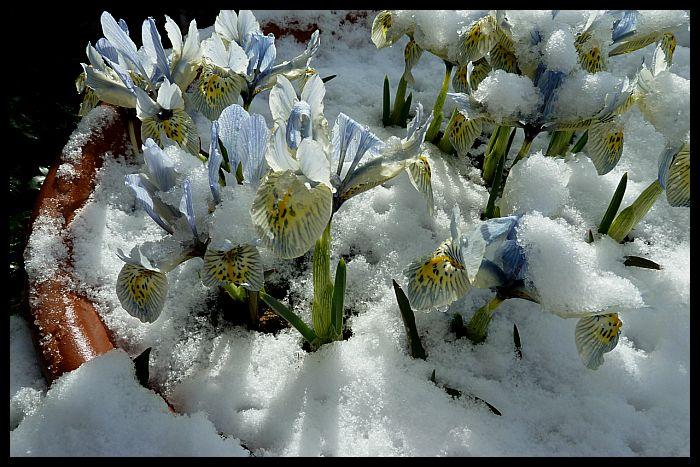Snow March 13th (6).jpg