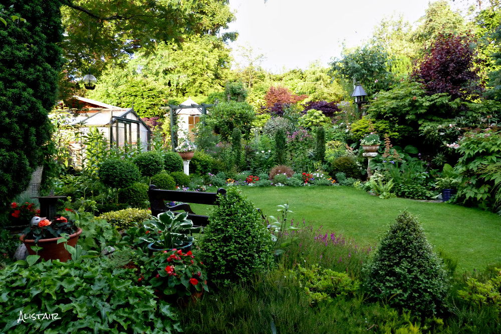 Back garden July 4th (3)