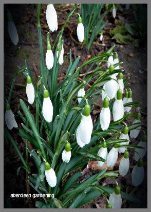February in the garden 029