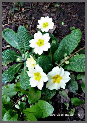 February in the garden 052