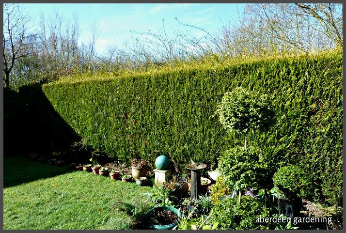 Back garden March (4)
