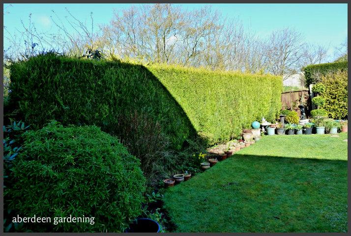 Back garden March
