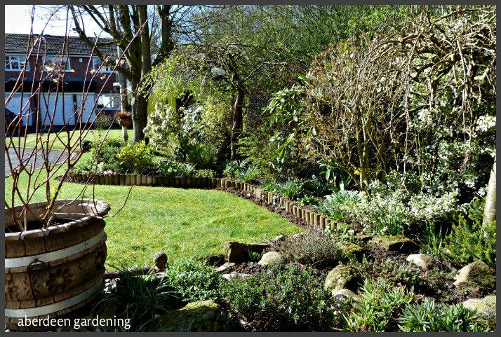 Front garden March (2)