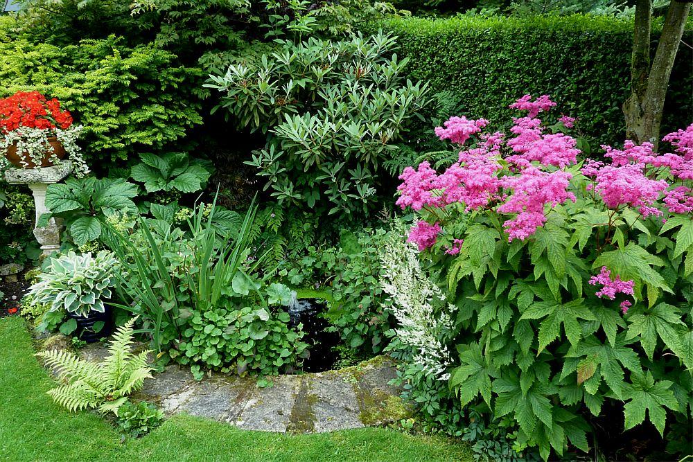 Back garden August 6th  (9)