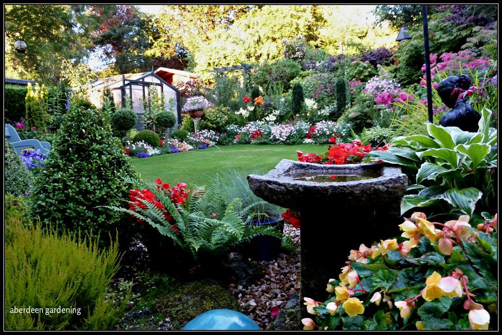 Back garden in August (7)