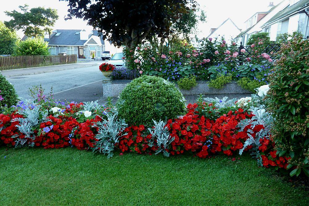 Front garden August 5th  (2)