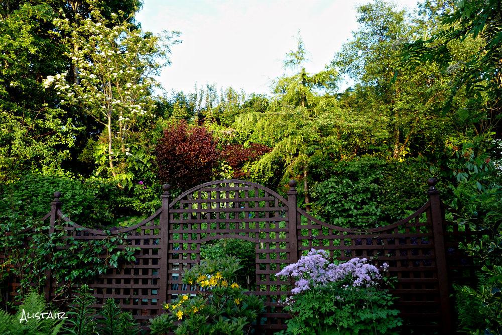Woodland (June) (4)