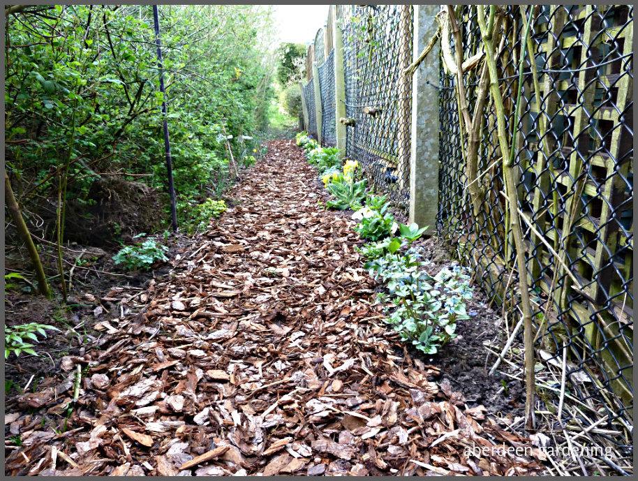 Woodland path April 17th
