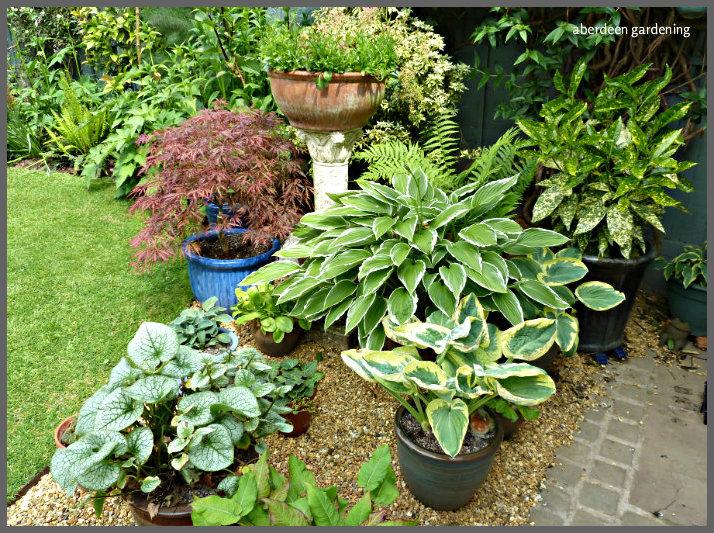 garden corners 5