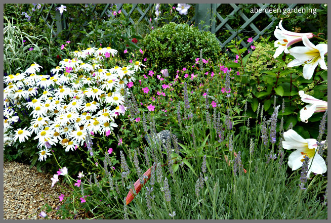 Back garden July24th (11)