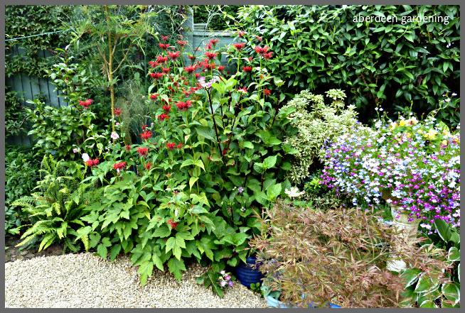 Back garden July24th (20)