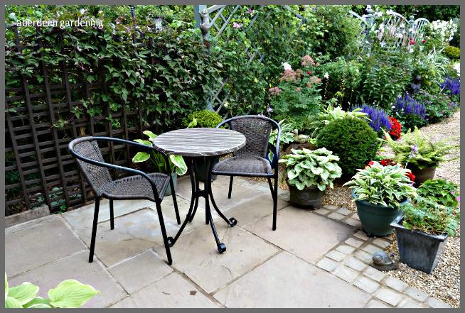 Back garden July24th (22)