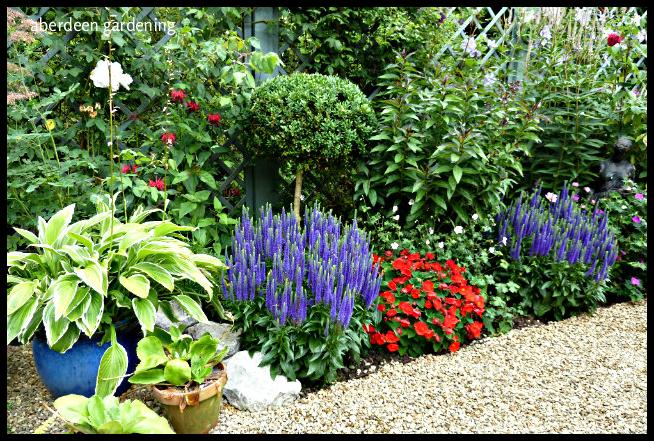 Back garden July24th (24)