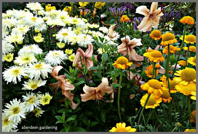 Back garden July24th (25)