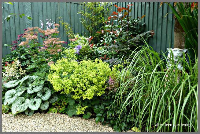 Back garden July24th (8)
