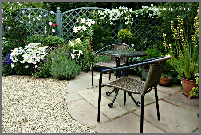 Back garden July24th (9)