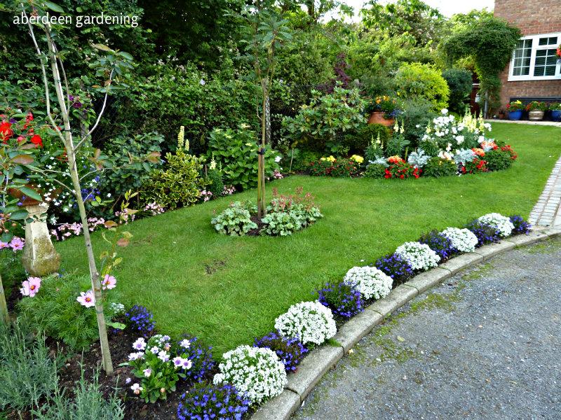 Front garden late June (4)