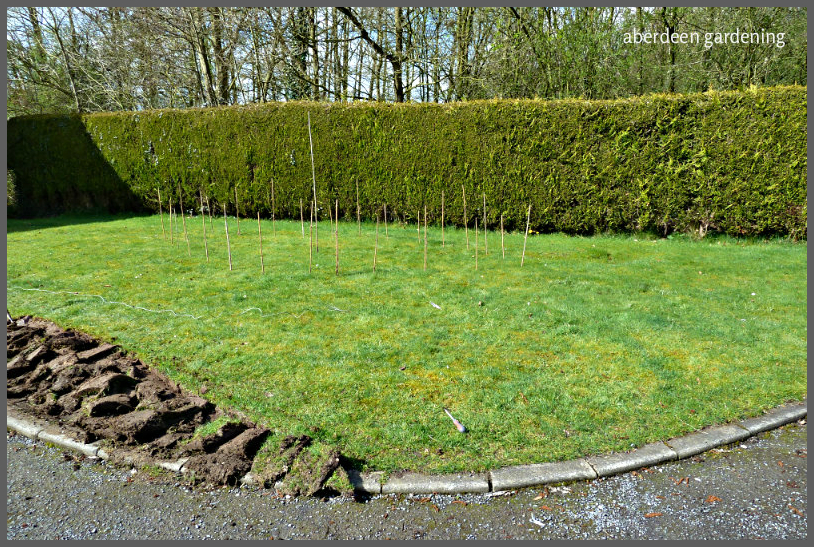 Making a Front Garden