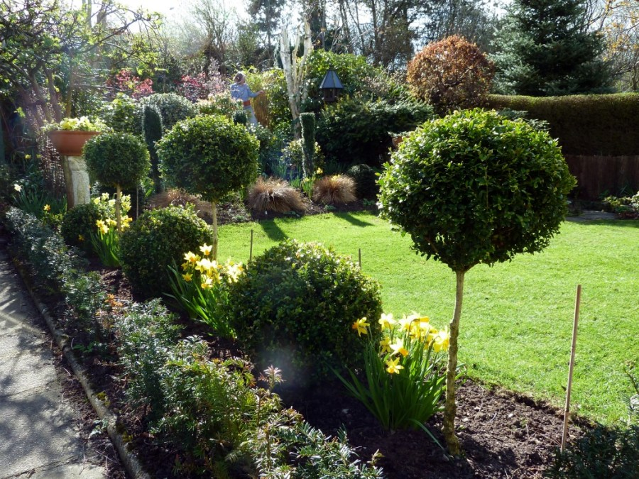 Spring in our Aberdeen back garden