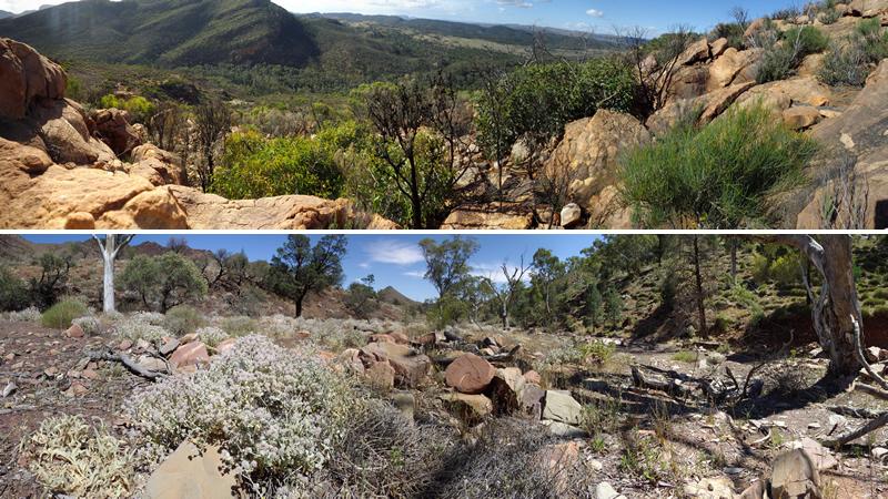 Flinders Ranges (top) Parachilna Gorge (bottom)