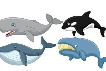 قائمة بجميع انواع الحيتان