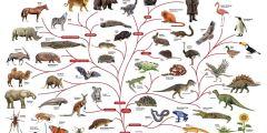 ما هي فروع علم الأحياء