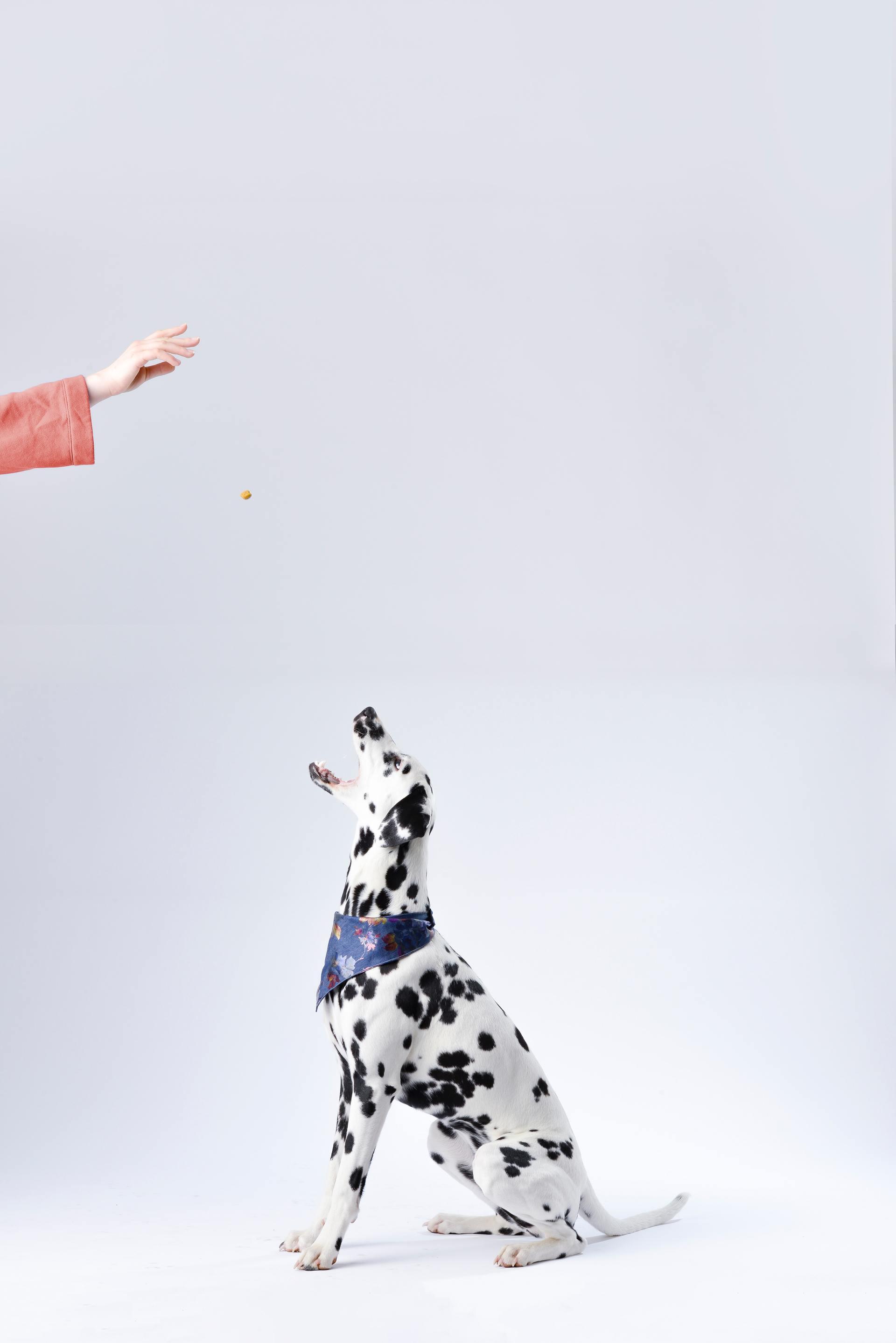 亞筆生技股份有限公司 - 貓糧狗糧常識