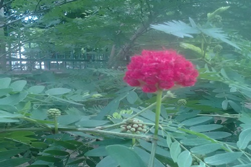Flower blossom because of love