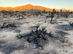 Read more about the article Back to the Mojave, Day One