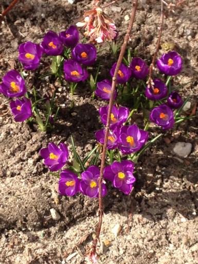 Farver og forår