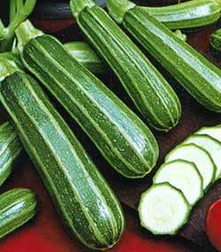 zucchini laterale2