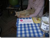 сигнализации и красавец кот был демагог. 042