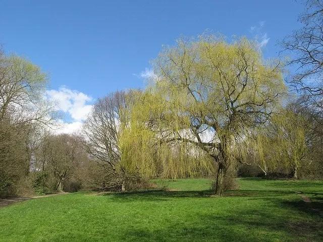 2209323 Hampstead Heath  -  London, UK London UK  Parks London Gardens Art