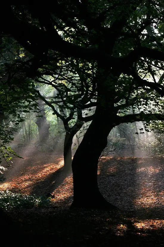 h132- Hampstead Heath  -  London, UK London UK  Parks London Gardens Art