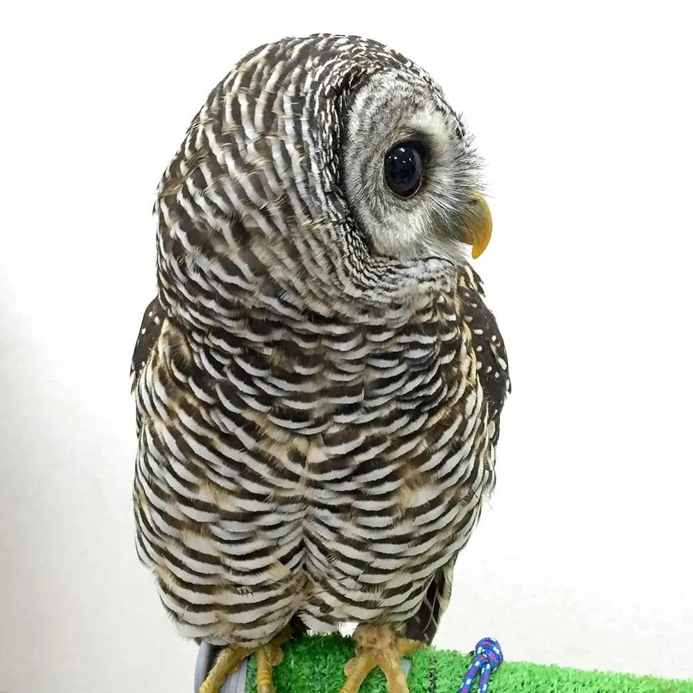 Owl Cafe 012 | Owl Cafe Tokyo