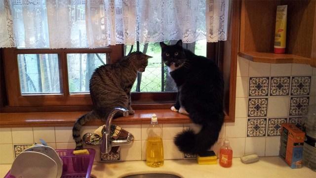 Minnie (links) & Puschel (rechts) am Küchenfenster