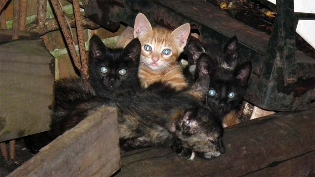 Maya und ihre Kinder