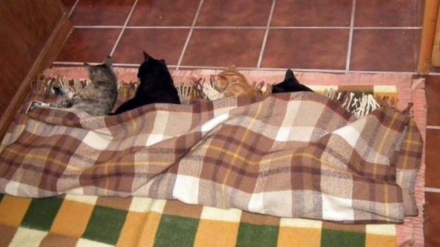 Elua, Luke, Anakin und Vader schlafen ihren Rausch aus