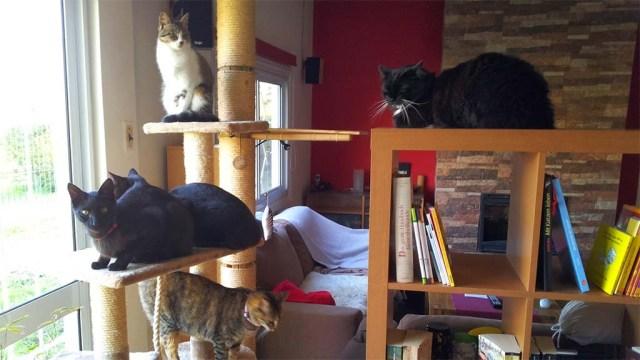 Oben: Kalea, Mitte: Vader und Luke, unten: Elua, rechts: Puschel