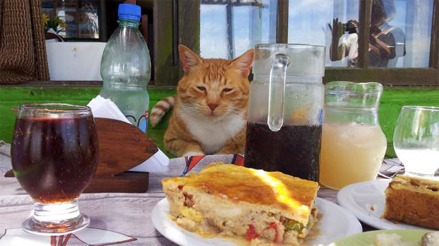 Menu con Gato!