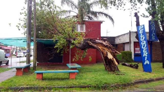 Der Baum wird dann wohl Brennholz für zukünftige Asados
