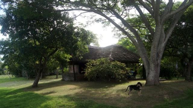 Barbacoa und Hund Brutus