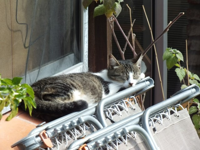 """Eine dösende Katze ist das Abbild perfekter Seligkeit."" (Jules François Félix Fleury-Husson)"