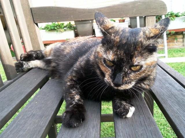 Katze Maya