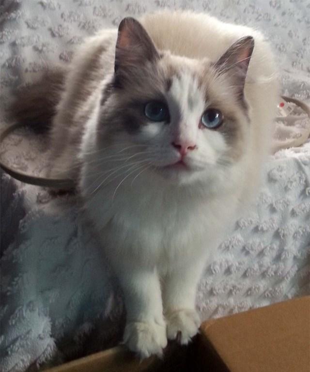 Kitten, 7 Monate alt