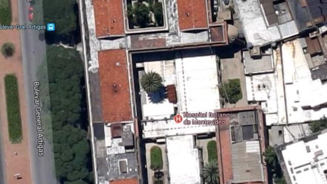 Palme im Hospital Italiano von oben bei Google Maps.