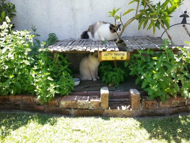 "Alice und Ana in der ""Catty Twister Bar"" - Catnip all you can sniff"