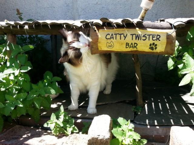 Alice in der Catty Twister Bar