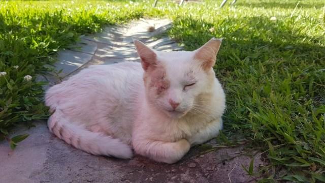 Sonne gibt's für Columbo nur noch mit Sonnenschutz auf den empfindlichen Stellen