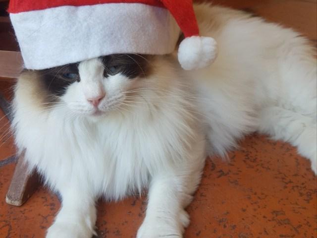 Unser Weihnachts Elf Alice